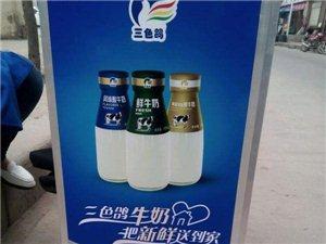 内乡县城内,喝三色鸽鲜奶 三种风味 免费送到家