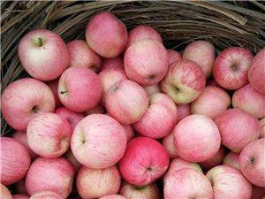 批發水果,每件三十五斤,六十元,品種好,果甜