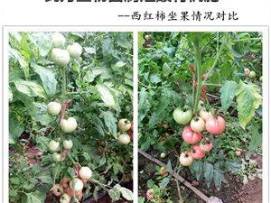 作物抗重茬生物肥料