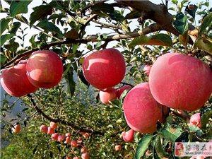 秋季比春季更適合移栽果樹