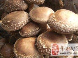 东山乡新鲜蘑菇