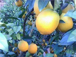 供应赣南脐橙70-90mm果