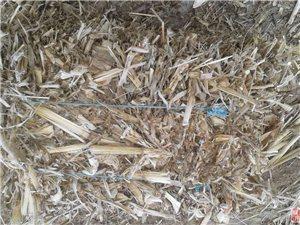 成捆玉米秸干草