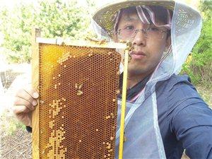 自家蜂厂直销蜂蜜花粉蜂王浆等批发零售一件代发
