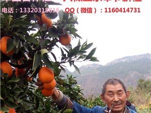 出售正宗奉節臍橙