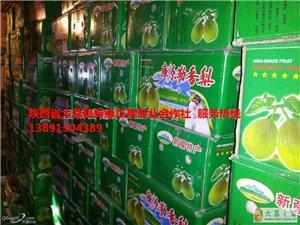 陜西大荔冷庫框子紅香酥梨產地批發最新價格