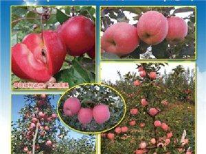 林安果樹研究所為您提供自繁自育優質純正苗木和接穗
