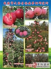 林安果树研究所为您提供自繁自育优质纯正苗木和接穗