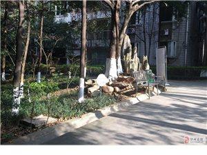 江阳区百子图广场检察院大户型房出售215m2平方