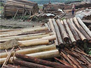 長期大量供應優質木材,價格從優,歡迎來人來電選購