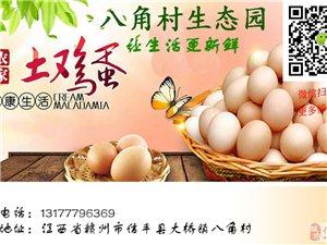 【土雞蛋】信豐大橋農家土雞蛋臍橙園散養,新鮮正宗