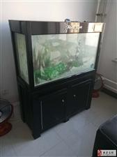 出售闲置生态鱼缸