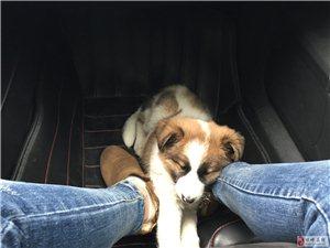 我家的狗狗丢了