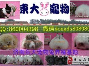 宠物兔专业养殖场批发零售