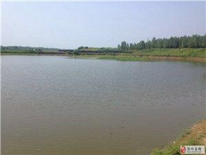 40畝魚塘出租