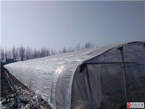 民权县反季节种植