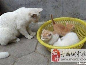 买小猫一只