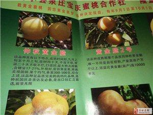 黄金脆,甜黄金,新世纪,各种优质桃苗