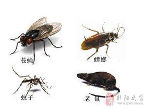 您是否也在尋找一家更專業的滅四害、白蟻的公司?