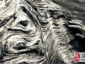 原木采伐開料,森林的守護者!