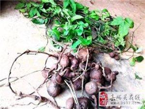 浙江富升三葉青種植銷售有限公司