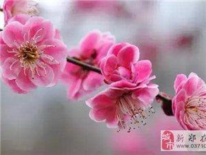 """清明時節去賞花,豫西大峽谷""""梅花觀瀑節""""浪漫啟幕!"""