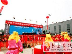 江苏鸽子放飞和平鸽 南京广场鸽景点鸽投放