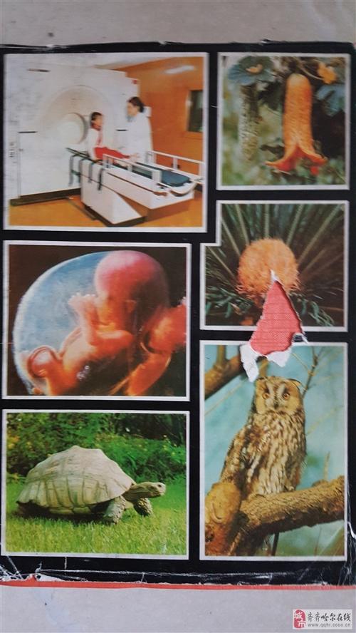 《少年自然百科词典》8元就卖了