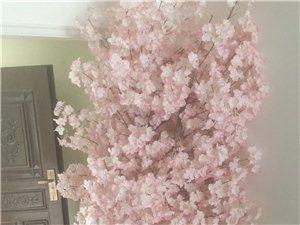 观赏用樱花树店面摆放家用摆放高回头率