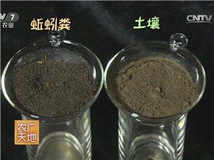 瓦力蚯蚓糞 通用營養土