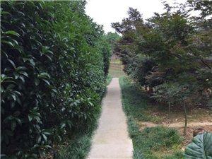 白馬鎮集體土地承包面積約130畝,現轉讓