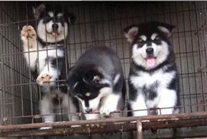 宠物狗狗幼犬出售啦!!!