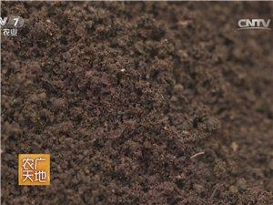 純蚯蚓糞種菜養花簡直是神一樣的存在