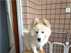 家养五个月大的狗狗