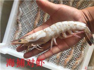 1-2萬只海捕蝦清庫出售