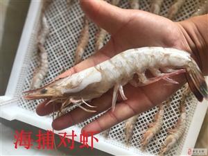 1-2万只海捕虾清库出售