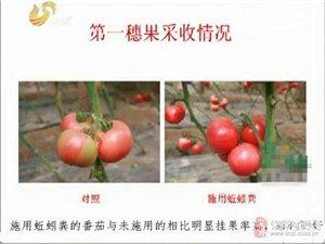 優質高產果蔬生物底肥