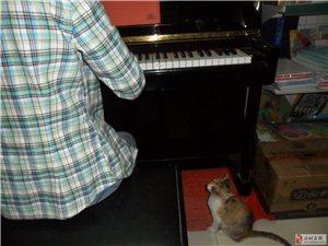 鋼琴一對一培訓