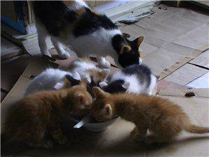 五只可爱的小猫