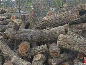 干核桃木原木