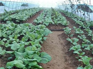 種菜種花好肥料,蚯蚓糞