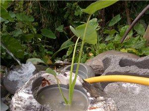 多肉植物石頭花盆