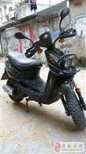 转让绿色山猫-摩托车