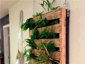 室内植物设计