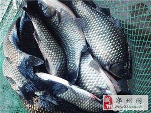 鄭州活魚水產批發、進口海鮮批發、冷凍品批發