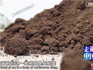 蚯蚓肥作物增產好肥料
