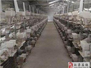 新蔡豫宏禽業常年出售優質種鴿