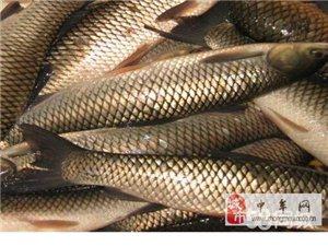 鄭州地區批發淡水魚、海鮮、凍品。哪里去?