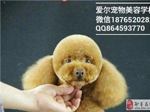 即墨寵物美容培訓,寵物美容師學校
