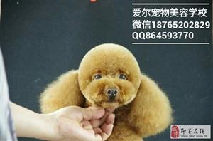 即墨宠物美容培训,宠物美容师学校